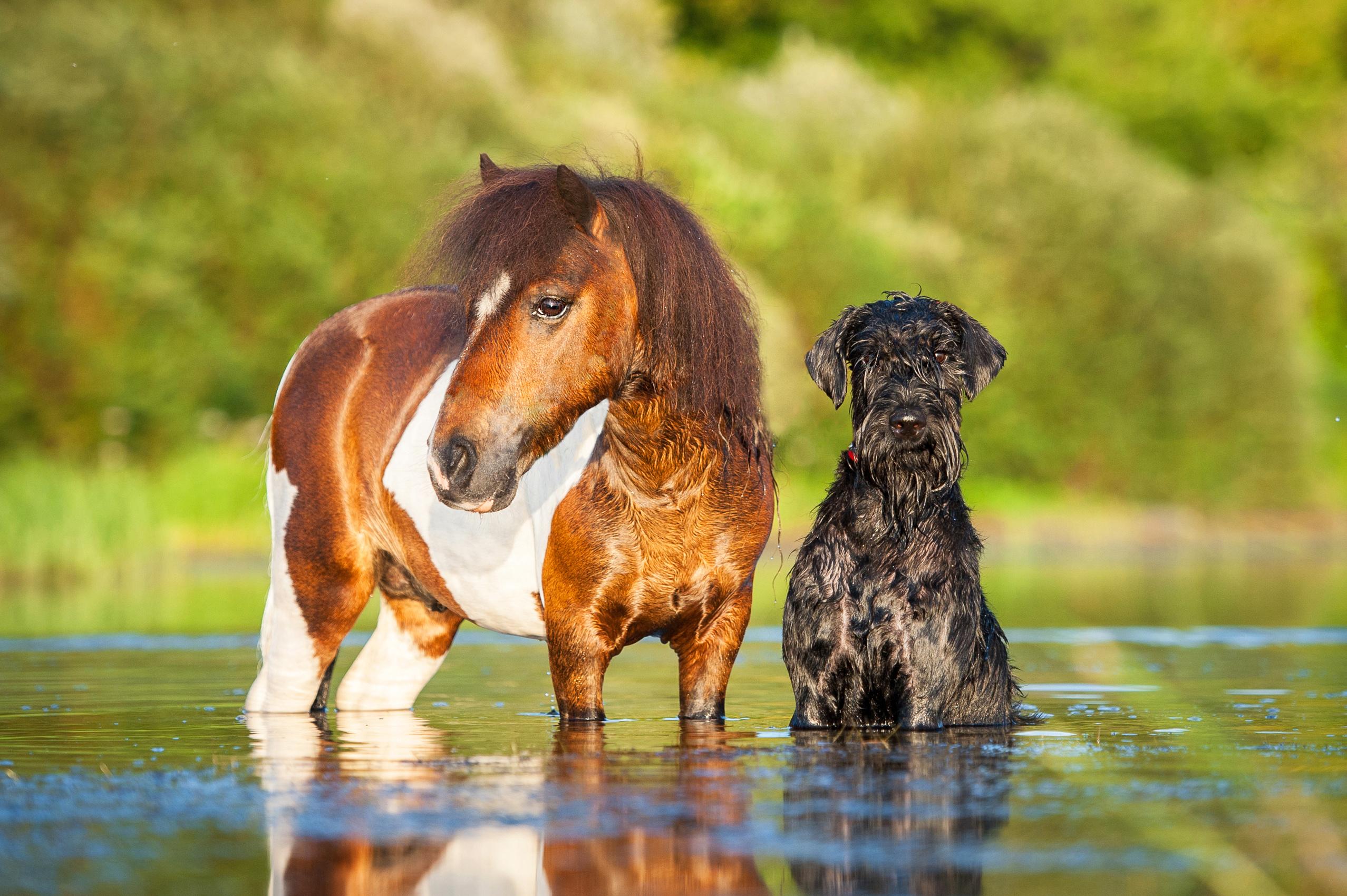 Föreläsningen Animals in Control