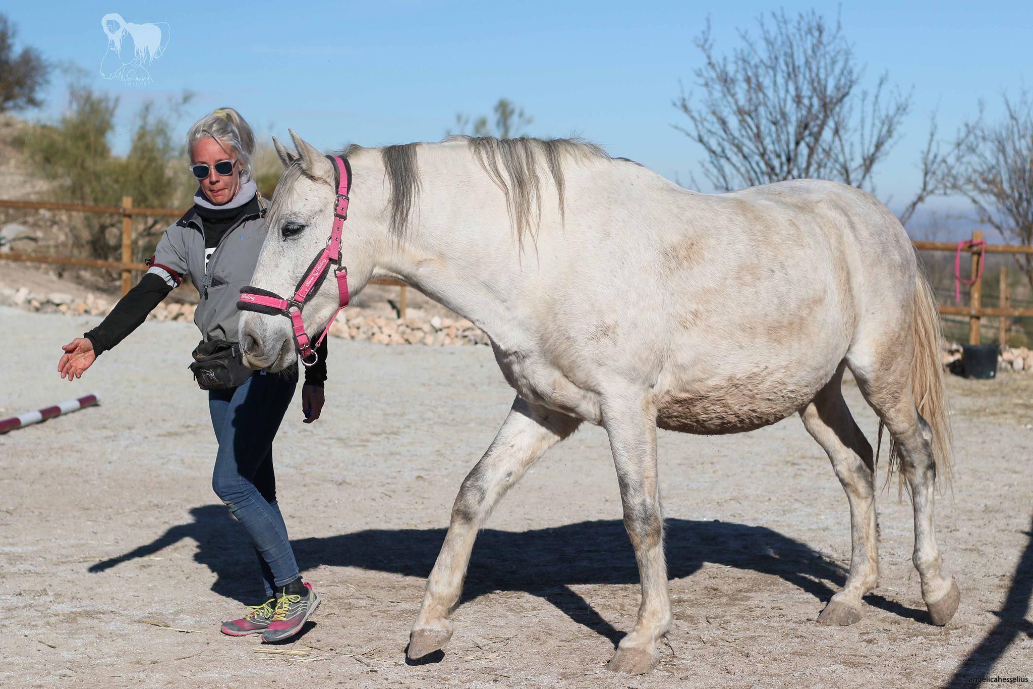 Introducera din häst till Belöningsbaserad Hästträning