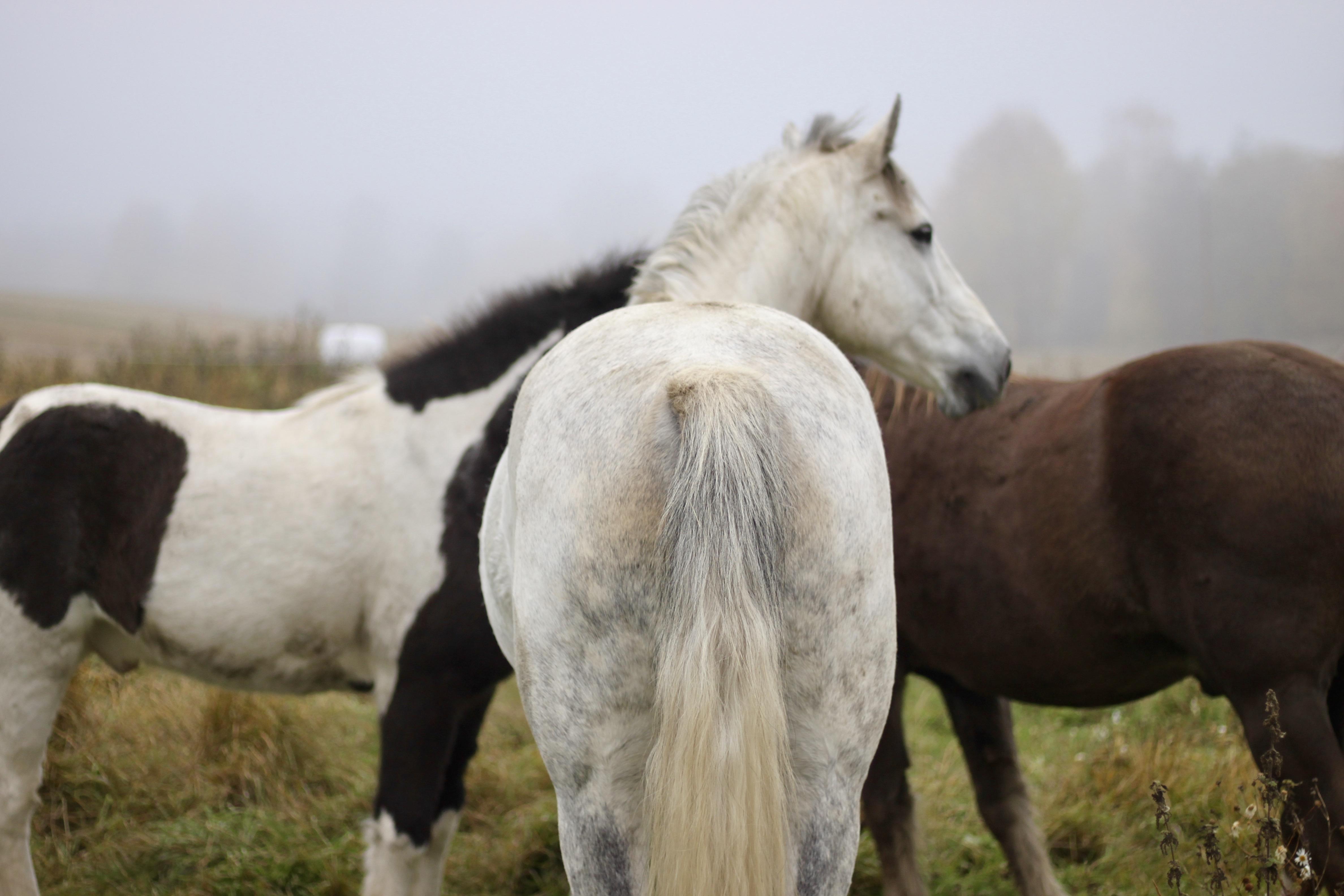 Emotioner hos häst