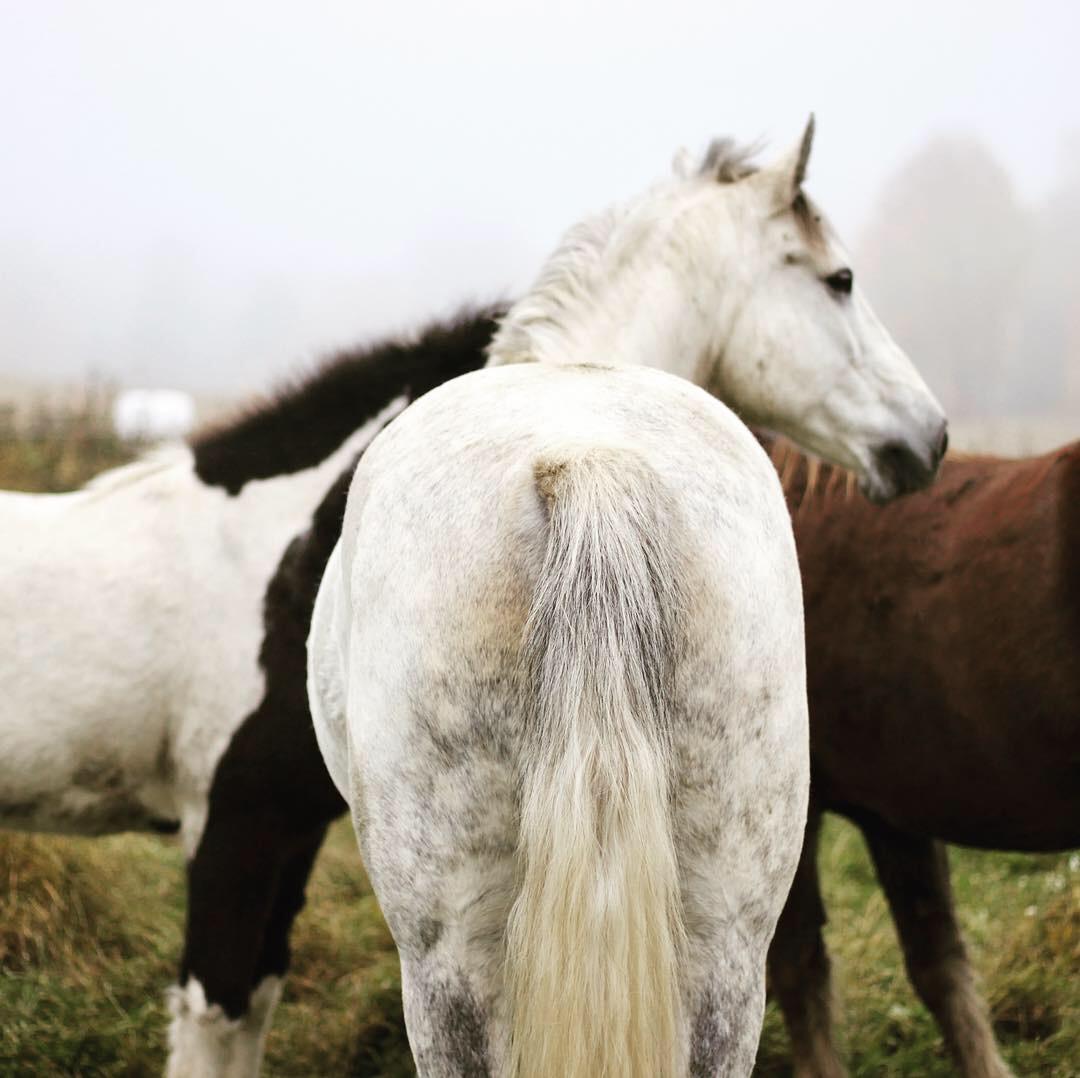 Emotioner hos häst, föreläsning i Säter, Sundsvall