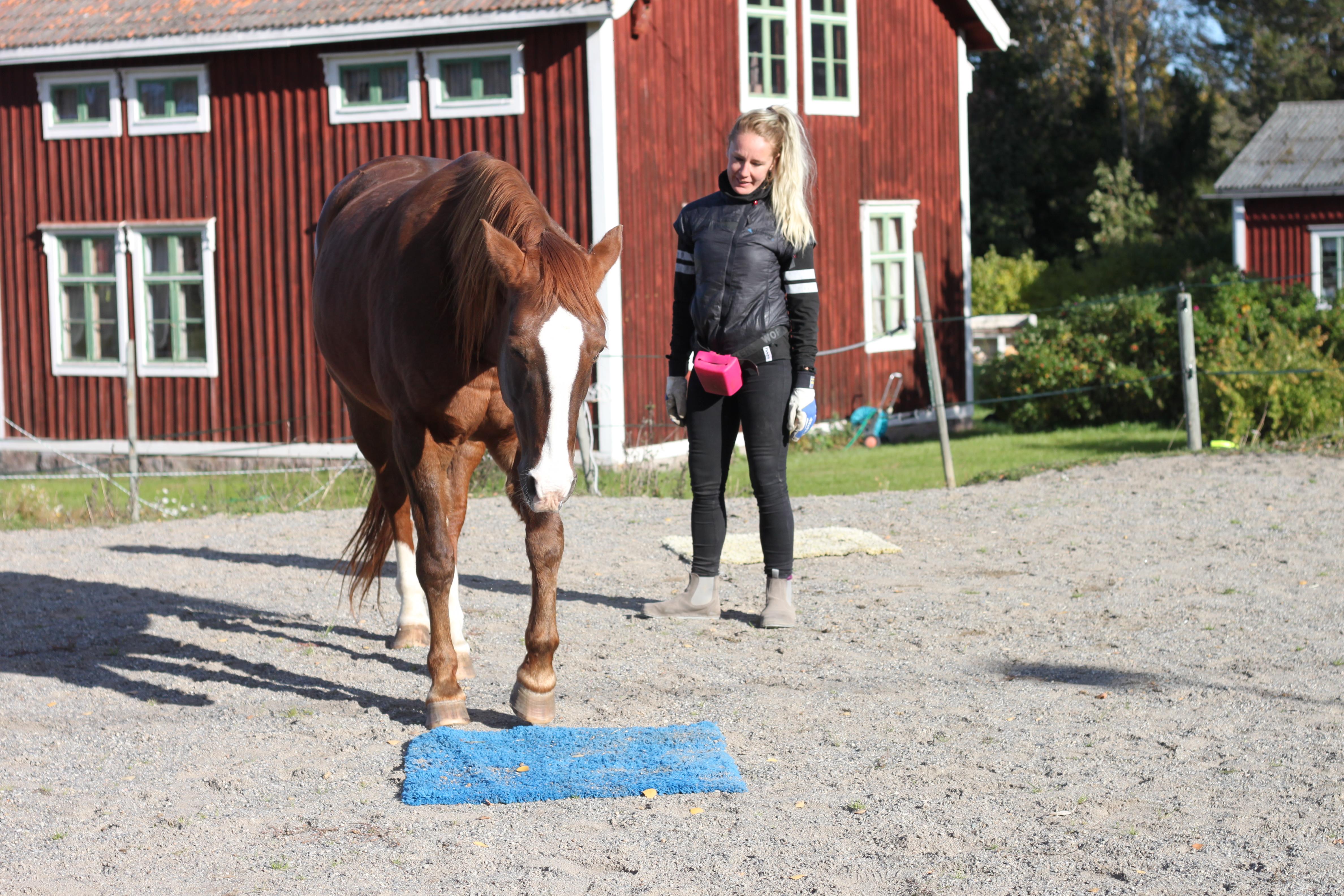 Hur lär sig din häst?