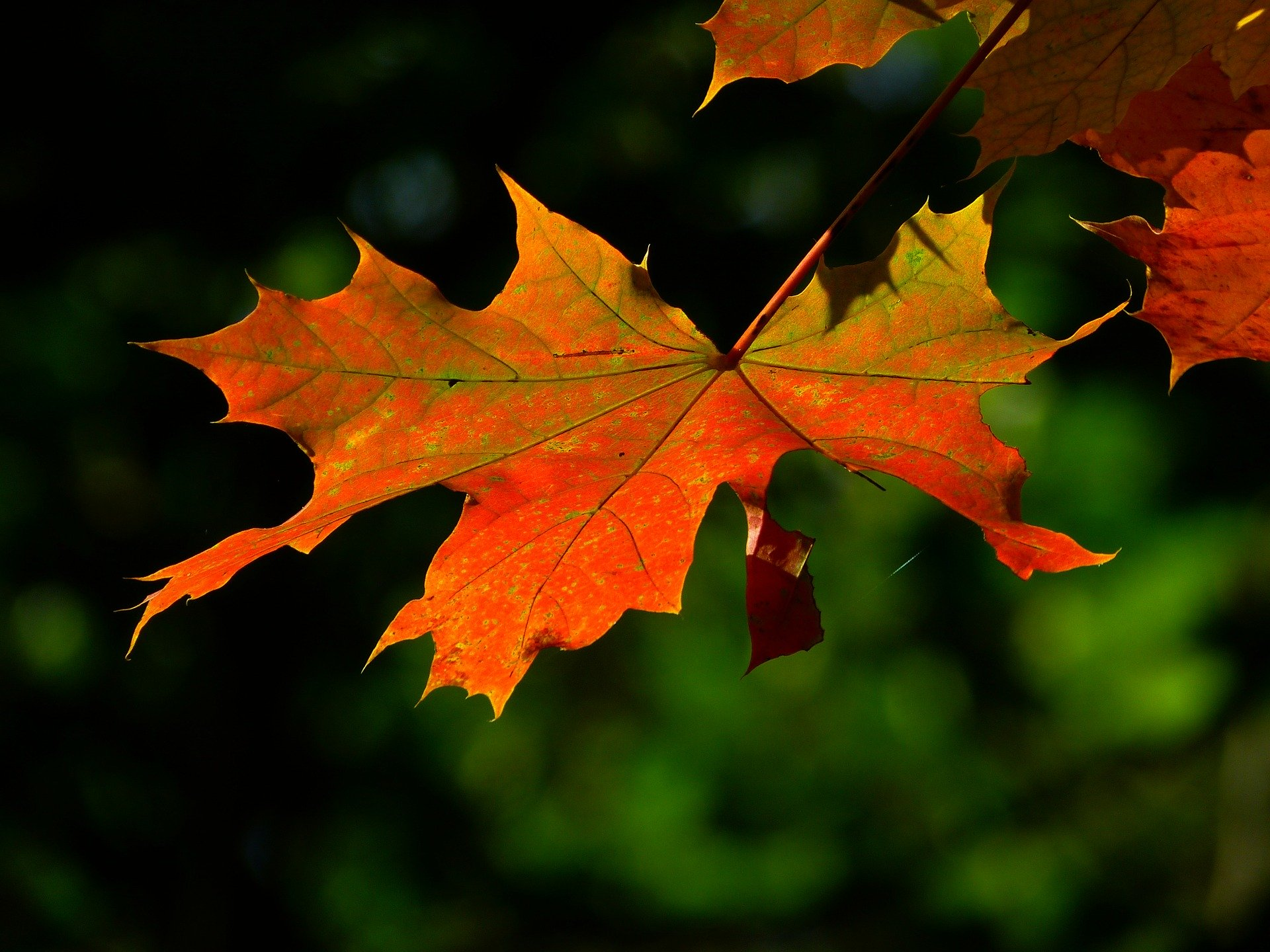 Upplägg på höstens distanskurser